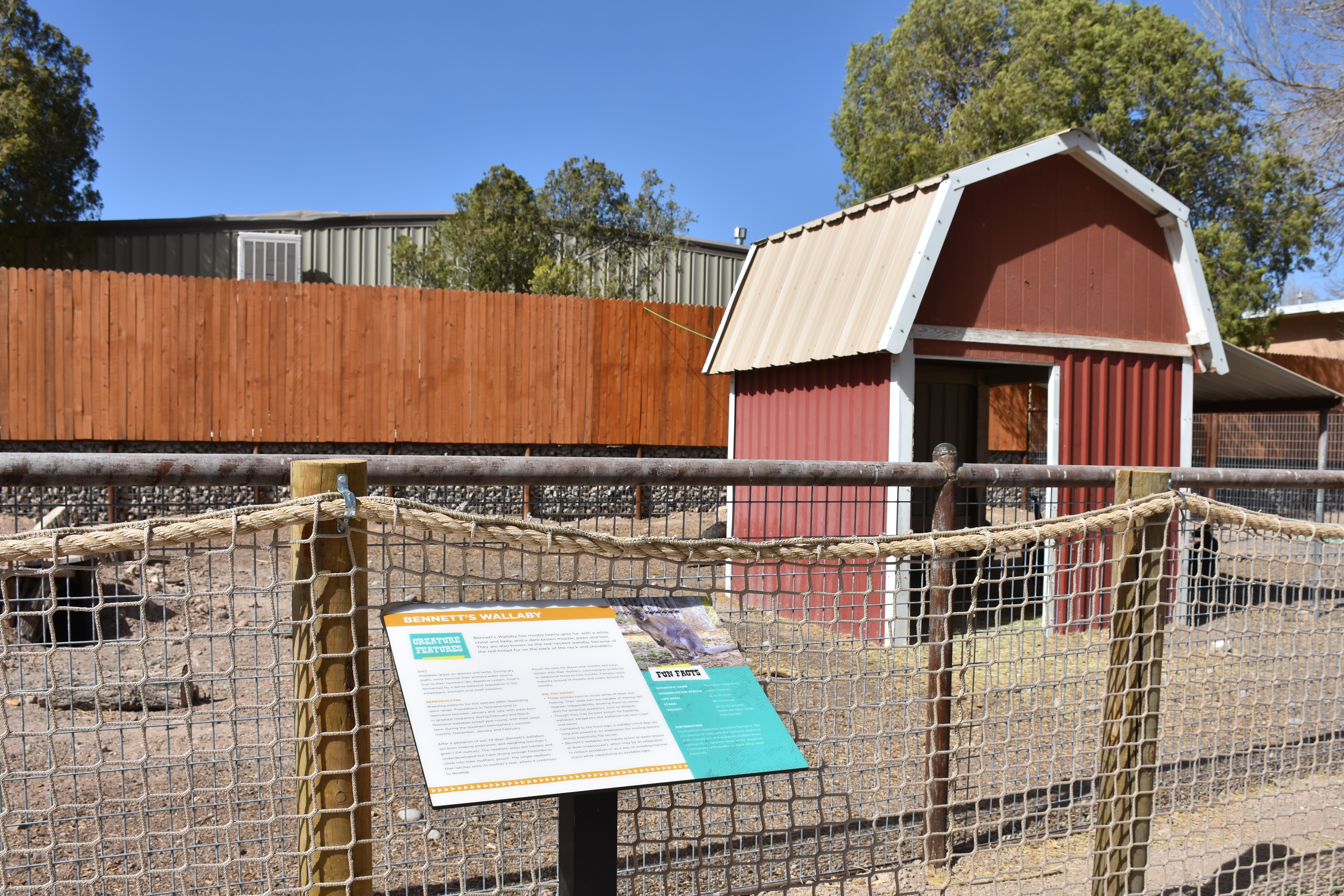 Wallaby Enclosure 1
