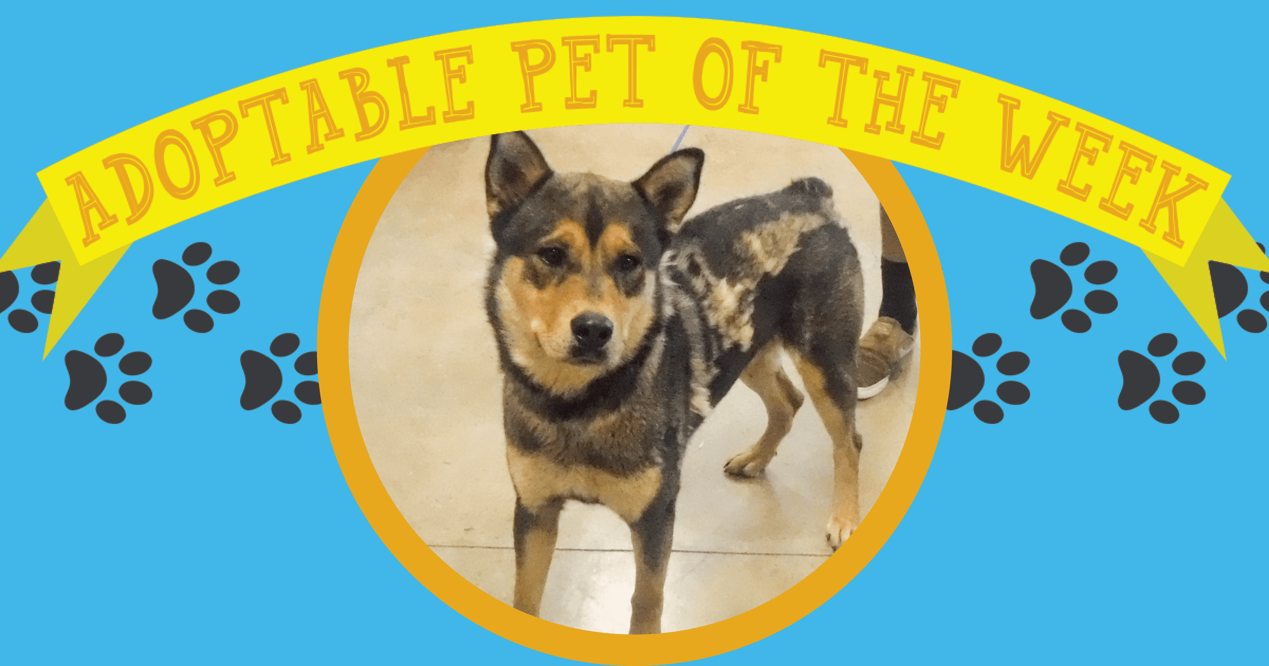 Adopt Of The Week (6-11-18)