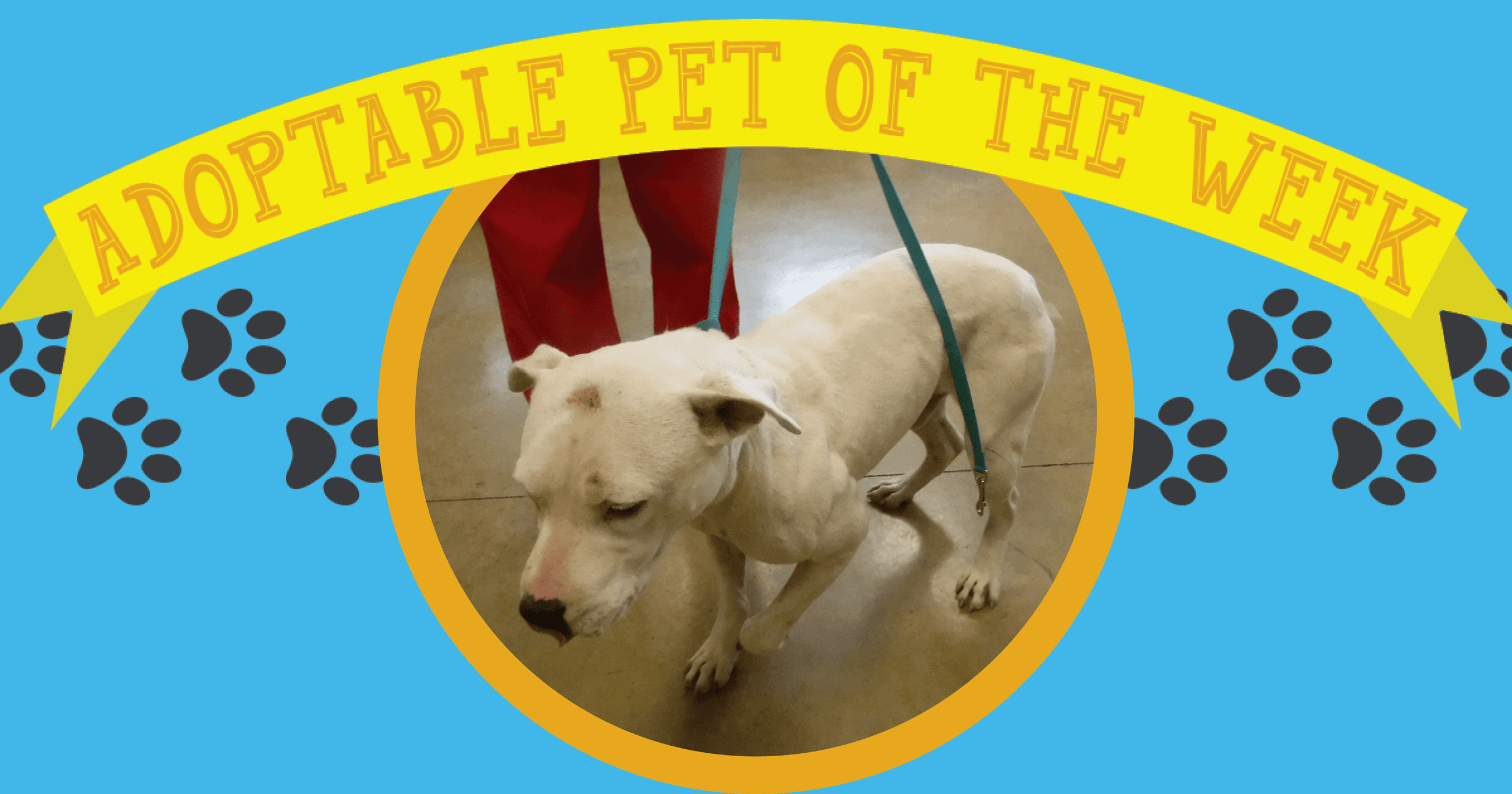 Adopt Of The Week (7-16-18)