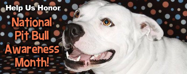 pit bull awareness month